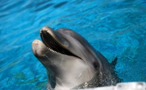 Israel Uses Dolphins as Spies